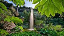 Coach Tour of Ischia and La Mortella Botanic Gardens from Sorrento, Sorrento, null