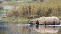 Jungle Safari in Chitwan National Park, Kathmandu, Attraction Tickets