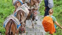 Rapid Annapurna Base Camp Trek, Kathmandu, Hiking & Camping