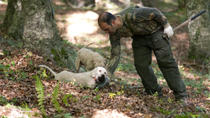 Private Tour: Truffle-Hunting Experience from Naples with Lunch, Naples, Food Tours