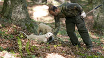 Private Tour: Truffle-Hunting Experience from Positano with Lunch, Positano, Private Sightseeing ...