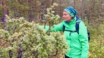 Magic of the Forest and Log Sauna, Rovaniemi, Day Trips