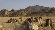 Sinai Desert Camel Day Trek to Matamir and Nawamis including Bedouin Lunch from Sharm el Sheikh, ...