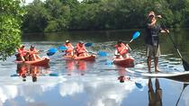 Naples Kayak Mangrove Tour, Naples, Kayaking & Canoeing
