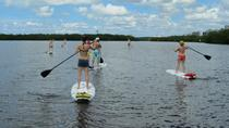 Paddleboard Back Water Mangrove Tour, Naples, Stand Up Paddleboarding