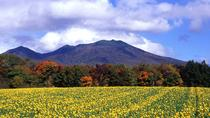 Furano and Biei Private Day Tour (Up to 15 Passengers), Hokkaido, Day Trips