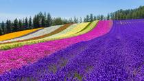Furano and Biei Private Day Tour (Up to 5 Passengers), Sapporo, Day Trips