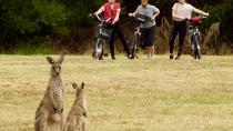 Canberra: 7 Hour Canbera Discovery, Tidbinbilla Wildlife and Electric Bike Tour, Canberra, Bike & ...