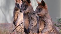 Canberra: Half Day Afternoon Wildlife and Electric Bike Tour, Canberra, Bike & Mountain Bike Tours