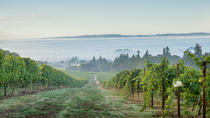 Vineyard Walk & Picnic, Portland, Wine Tasting & Winery Tours