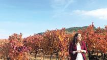 Rioja and Navarra Wineries Tour from San Sebastian , San Sebastian, Wine Tasting & Winery Tours