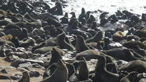 Explorer Cape Cross seal colony Day Tour, Walvis Bay, Day Trips