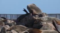 Swakopmund Cape Cross seal colony Day Tours, Swakopmund, Day Trips