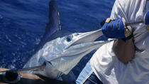 Sosua Deep Sea Fishing Individual Passes, Dominican Republic, Fishing Charters & Tours