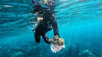 Snorkeling From the Shore (Private Tour), Terceira, Private Sightseeing Tours