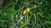 Birdwatching at Hanging Bridges, La Fortuna, 4WD, ATV & Off-Road Tours