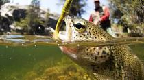 Arctic River Fishing Tour, Rovaniemi, Fishing Charters & Tours