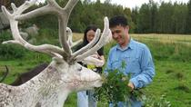 Highlights of Rovaniemi Day Tour - Summer, Rovaniemi, Attraction Tickets