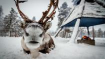 Reindeer Farm Experience, Rovaniemi, Cultural Tours