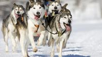 Snowy Trails Husky Safari (10 Km), Rovaniemi, Ski & Snow