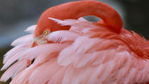 Flamingo Gardens Admission in Fort Lauderdale with Wildlife Tram Ride, Fort Lauderdale