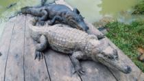WORLD OF LIZARDS AND PIRAÑAS, Iquitos, 4WD, ATV & Off-Road Tours