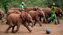 Half Day Trip David Sheldrick Elephant Orphanage and Giraffe Center Tour From Nairobi, Nairobi,...