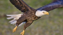 Alaska Rainforest Sanctuary Walking Tour and Wildlife Encounter, Ketchikan, Air Tours