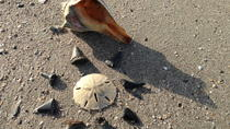 Shell Hunting Expedition on Morris Island, Charleston, Day Cruises