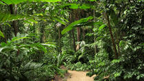 Cairns Sightseeing Tour Including Botanical Gardens, Mt Whitfield and the Dome, Cairns & the ...