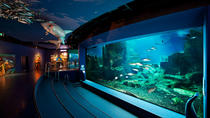 Admission Ticket to Istanbul Aquarium, Istanbul, Attraction Tickets