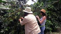 Coffee Tour in the beautiful Jardin town (Full-Day), Medellín, Coffee & Tea Tours
