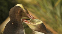 Dunedin and the Otago Peninsula Wildlife Tour, Dunedin & The Otago Peninsula, Attraction Tickets