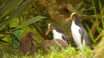 Dunedin Shore Excursion: Dunedin and Otago Peninsula Wildlife Tour with Optional Larnach Castle ...