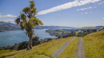 Small-Group Tour of Dunedin City, Dunedin & Otagohalvøen