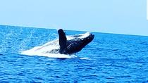 Whale Watching Experience, Big Island of Hawaii, Day Cruises