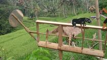 Bali Shore Excursions to Ubud Country Side, Ubud, Day Trips