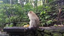 Ubud Monkey Forest, Art Market, Royal Palace,Tegalalang Rice Terrace, Ubud, Market Tours