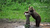 Gypsies, wildlife & Saxon heritage tour in Transylvania (2 days, from Cluj), Cluj-Napoca,...
