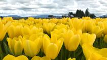 Washington Tulip Festival & Deception Pass Hike Small Group Tour, Seattle, Hiking & Camping
