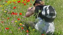 Full Day Botanical Tour In Mani, Peloponnese, Kalamata, 4WD, ATV & Off-Road Tours