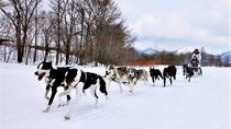 Dog Sledding Day Tour with Special Picnic Lunch: Small Group Tour, Hokkaido, Ski & Snow