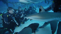 Shark Dive, Freeport, 4WD, ATV & Off-Road Tours