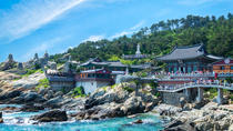 Best of Busan With Yonggungsa Temple, Yongdusan Park and Dongbaek Island, Busan, Full-day Tours