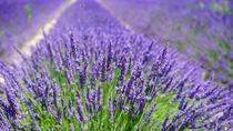 Lavender Experience : Private Chauffeur, Aix-en-Provence, Private Sightseeing Tours