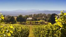 Josef Chromy Wines Winery Tour Including Tasting and Lunch, Launceston, City Tours