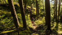 Whistler Singletrack Mountain Bike Tour, Whistler, Bike & Mountain Bike Tours