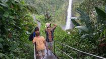 Big Island in a Day: Waterfalls, Rainforest, Coffee Farm, History