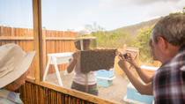 Kona Tour: Coffee Plantation, Kealakekua Bay, Kaloko-Honokohau Park and Bee Farm, Big Island of ...