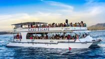 Los Cabos Breakfast Snorkel Cruise, Los Cabos, Dolphin & Whale Watching